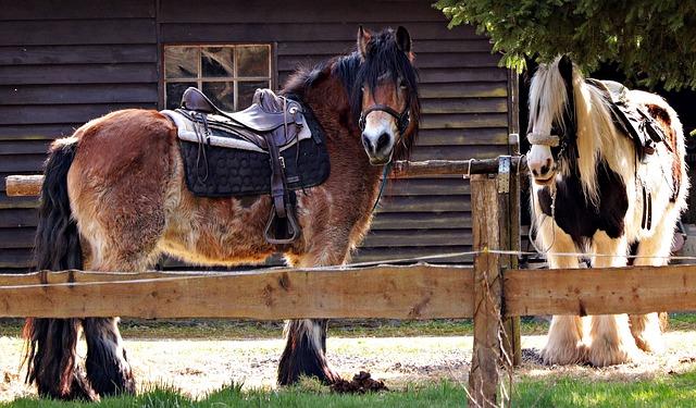osedlané koně